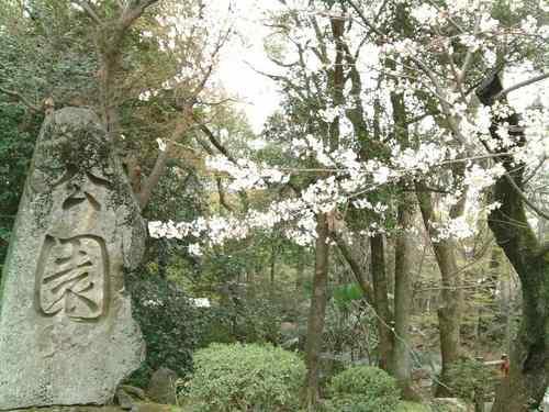 0328-13岡崎城公園.jpg