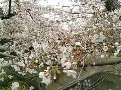 0328-14岡崎城公園.jpg