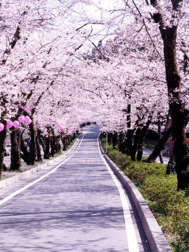 家山桜トンネル.jpg